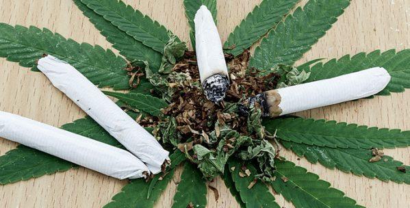 Au Canada, le cannabis sera légal dans quelques mois