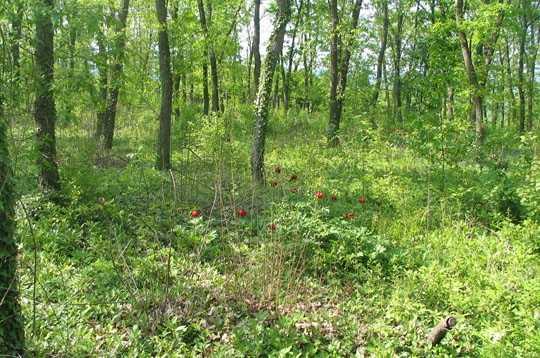 ZIGUINCHOR: Quatre personnes disparaissent dans la forêt de Bousoloum