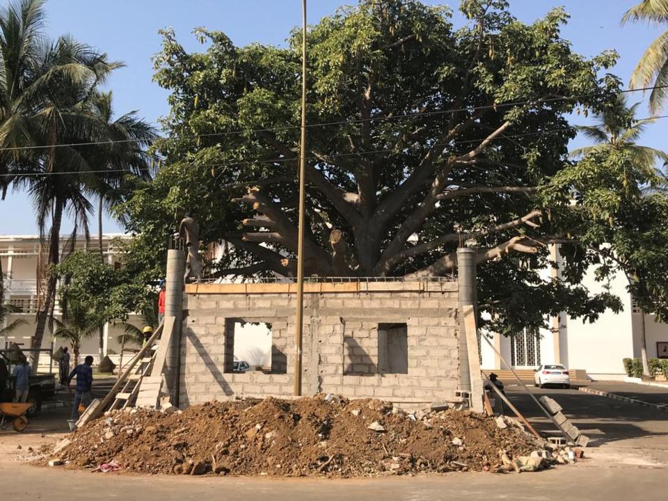 [Tribune] : Halte au massacre en cours du Baobab centenaire de la Faculté de Médecine de l'UCAD