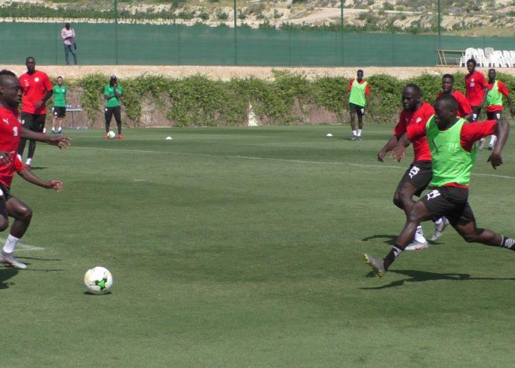 STAGE DE PREPARATION EN ESPAGNE: Des Lions en jambes jouent en amical cet après-midi face à une équipe locale d'Alicante