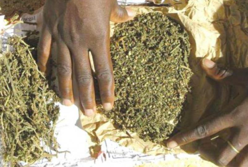 INTERPELLÉS AVEC 23 KG DE YAMBA: Le boulanger Mouhamed Mbaye et le berger Birane Sow risquent 10 ans de réclusion criminelle