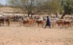 4e Journée nationale de l'élevage: Des organisations appelent à éradiquer les vols de bétail