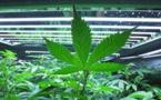 RAPPORT SUR LES FLUX FINANCIERS ILLICITES: 50 milliards de dollars échappent à l'Afrique par an, le Sénégal parmi les principaux pays «producteurs» de cannabis en Afrique de l'Ouest
