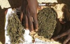SAISIE DE 1 KG DE DROGUE AU «MARKET» DE THIAROYE: Le dealer récidiviste vendait du yamba pour nourrir sa famille