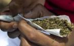 """Micro Trottoir sur la Dépénalisation de l'herbe """"Yamba"""". Des Sénégalais donnent leur avis"""