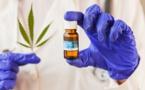 Chanvre ou Cannabis une plante entre le bien et le mal