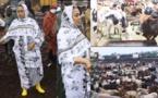 Magal 2020 : Sokhna Aida Diallo au Mali pour acheter des bœufs
