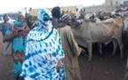 Urgent-Touba: Sokhna Aïda Diallo répond à Serigne Modou Lô Ngabou, après son interdiction…
