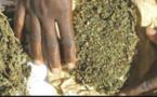 ÉLÈVE DE TERMINALE S2 : Martine Ndour, 20 ans, tombe avec 28 cornets de yamba et prend 1 mois ferme